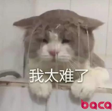 我太难了表情包 猫猫沙雕表情包
